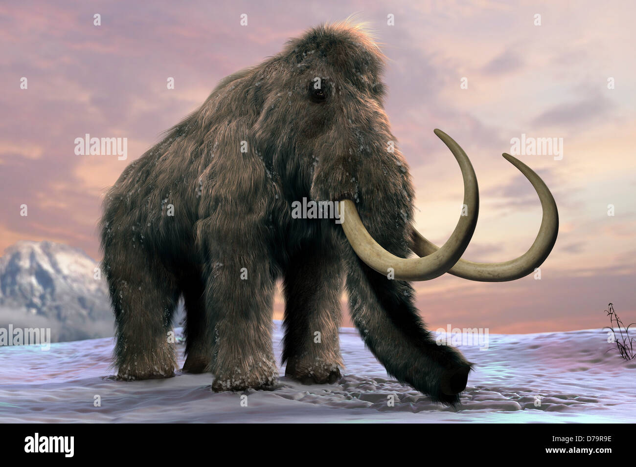 Wooly Mammoth Stock Photo