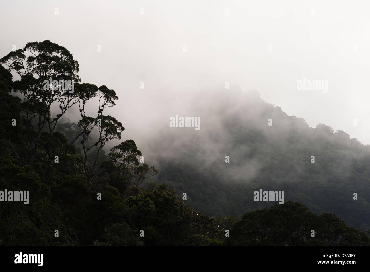 Colombia - misty rain forest in the Sierra Nevada de Santa Marta - Stock Image