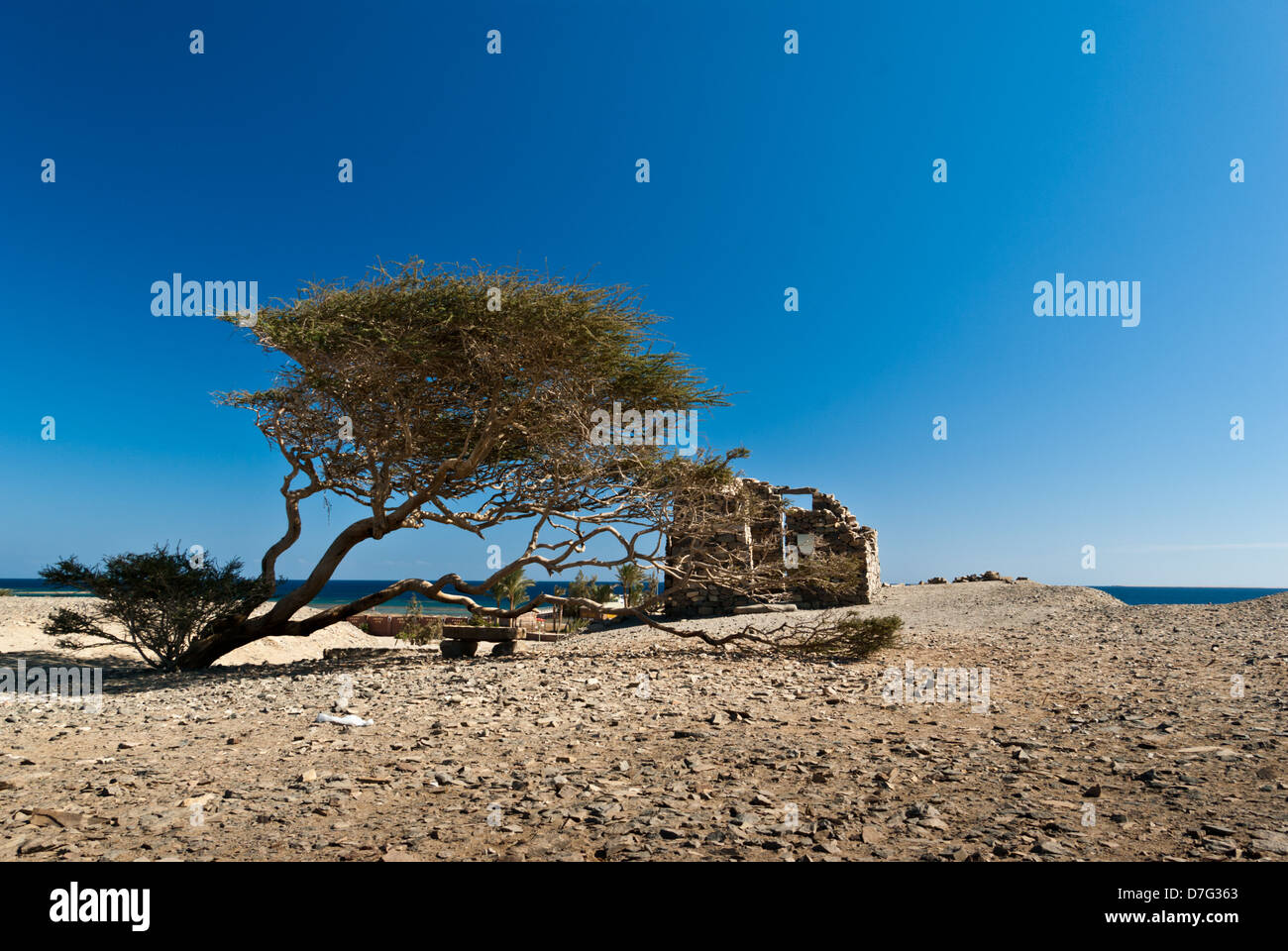 Landscape with a sea and acacia near Wadi Gamal (also spelled as Gemel, Gimal, Gemal or Jimal) National Park, Upper - Stock Image