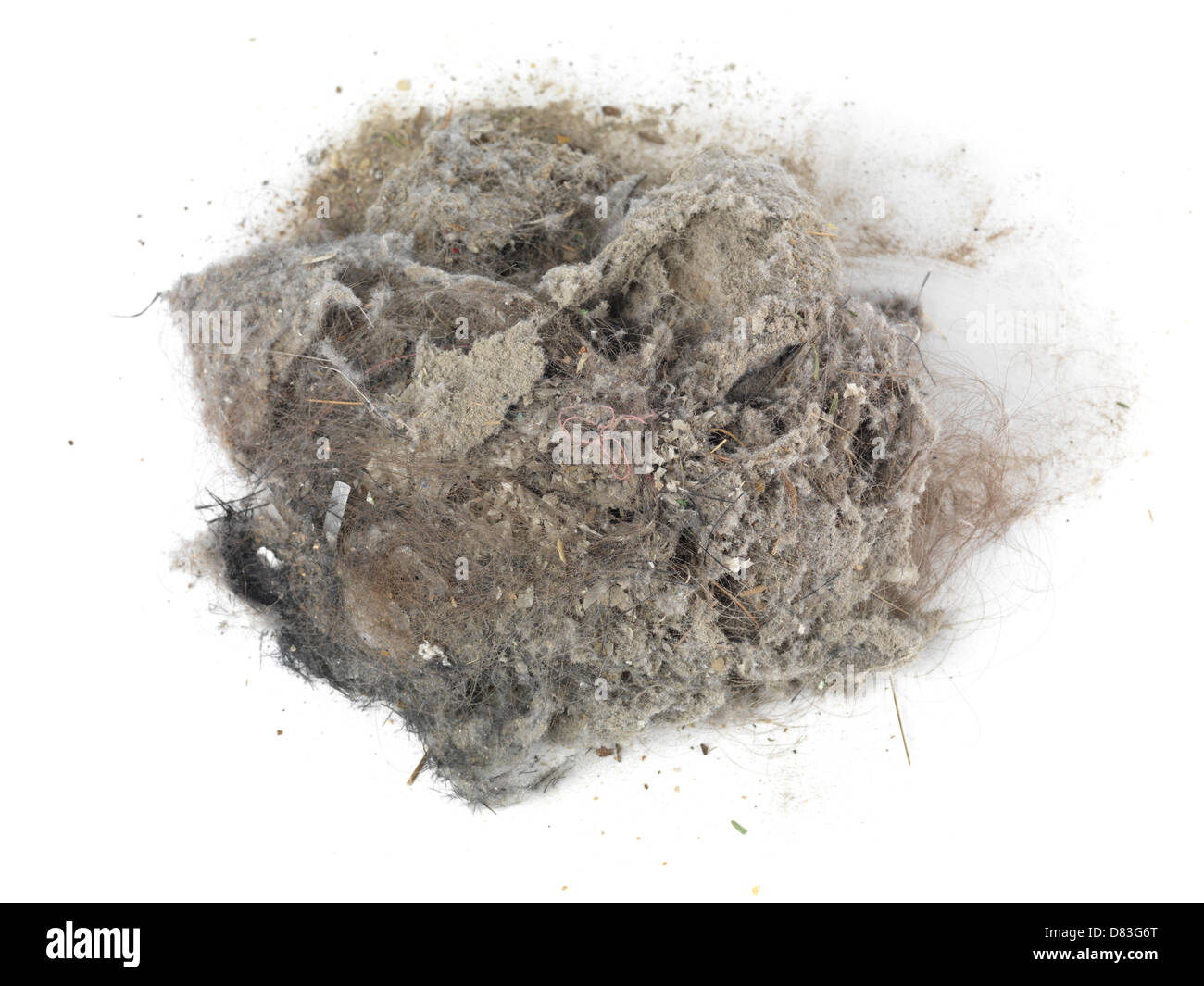 Pile of dust and hairs collected with a vacuum cleaner isolated on white background - Stock Image