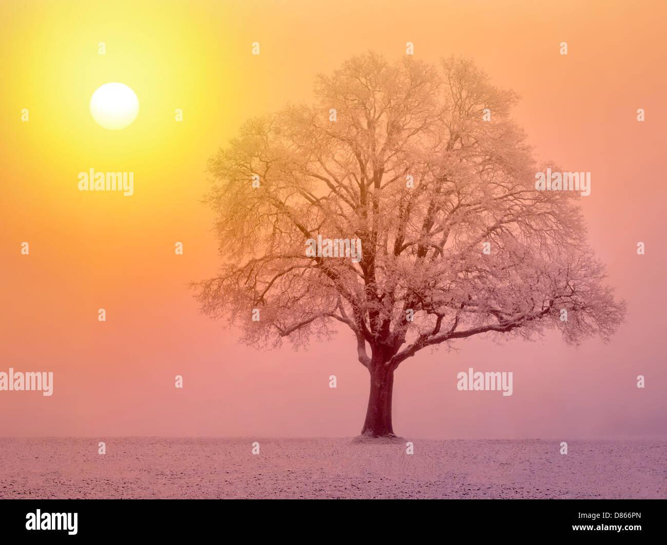 Lone oak tree in field. Wilsonville, Oregon - Stock Image