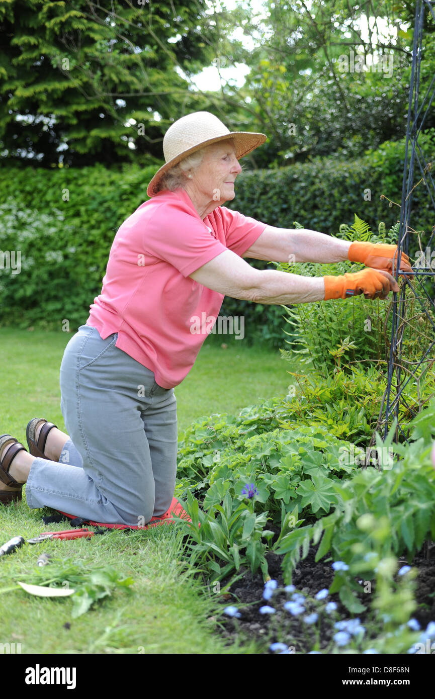 Elderly Lady Gardening In Her Family Garden At Home In North Yorkshire, Uk