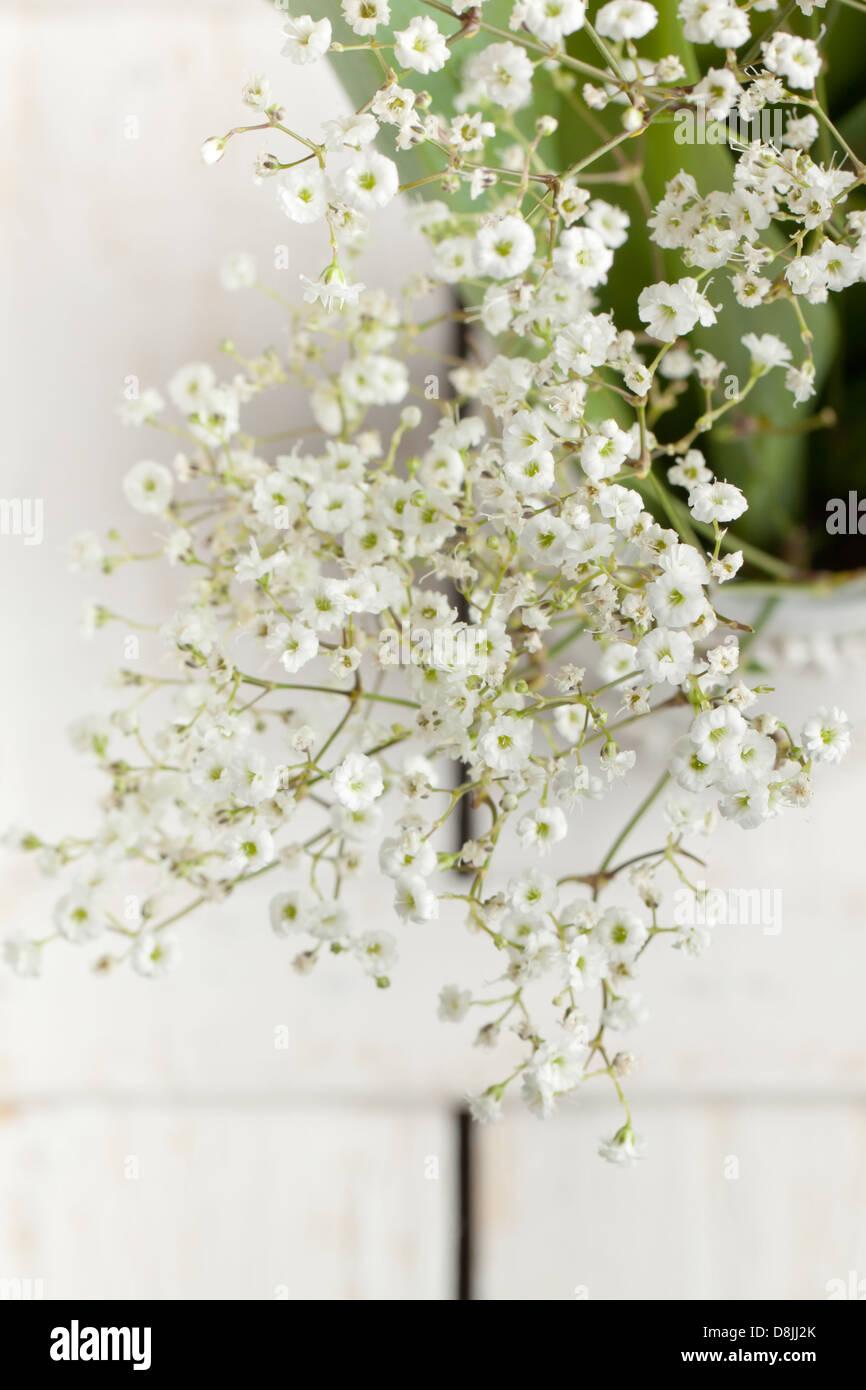 Bunch of gypsophila babys breath flowers on white wooden table bunch of gypsophila babys breath flowers on white wooden table mightylinksfo