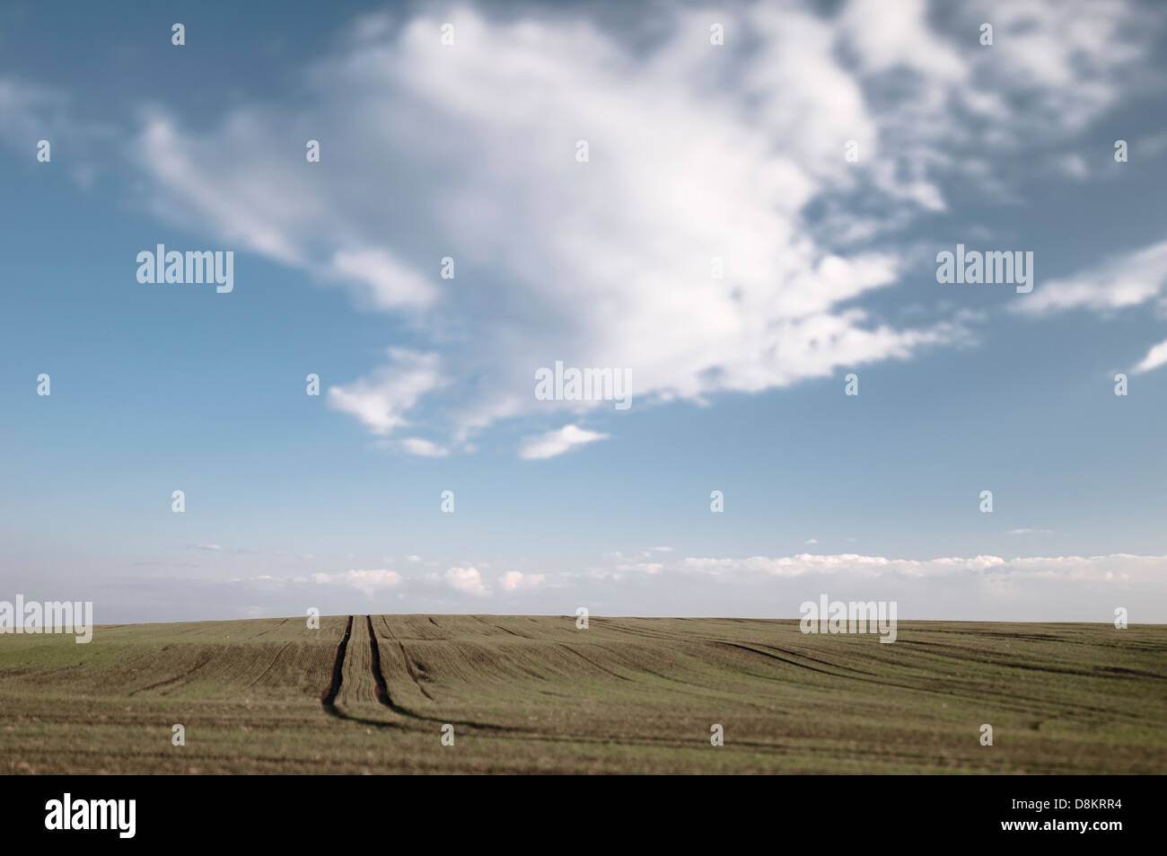 Field in Teutschenthal Saalekreis District, Saxony-Anhalt, Germany - Stock Image