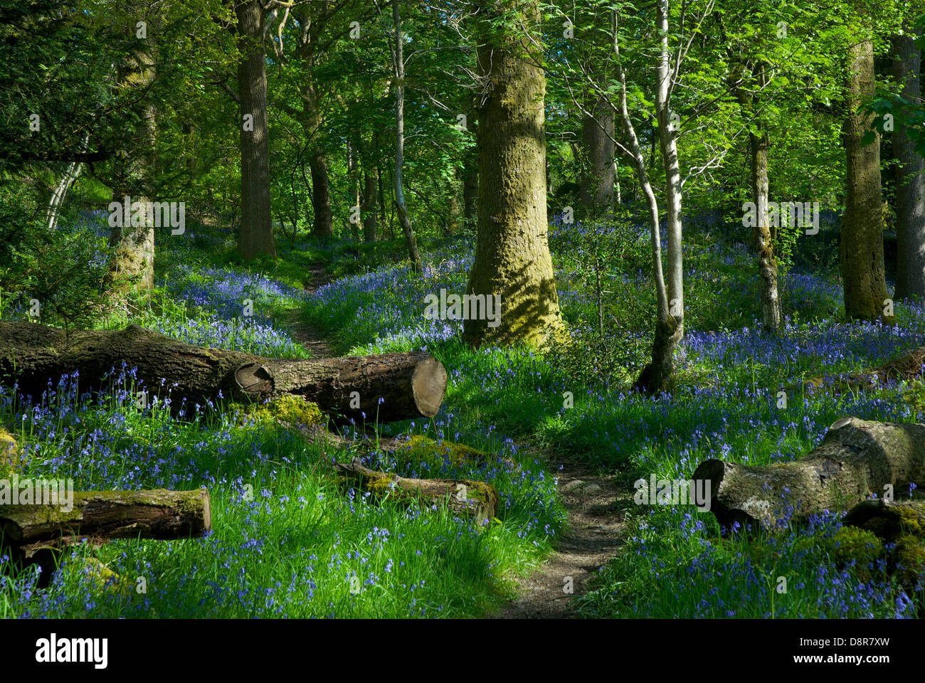 barkbooth-lot-a-woodland-nature-reserve-managed-by-cumbria-wildlife-D8R7XW.jpg