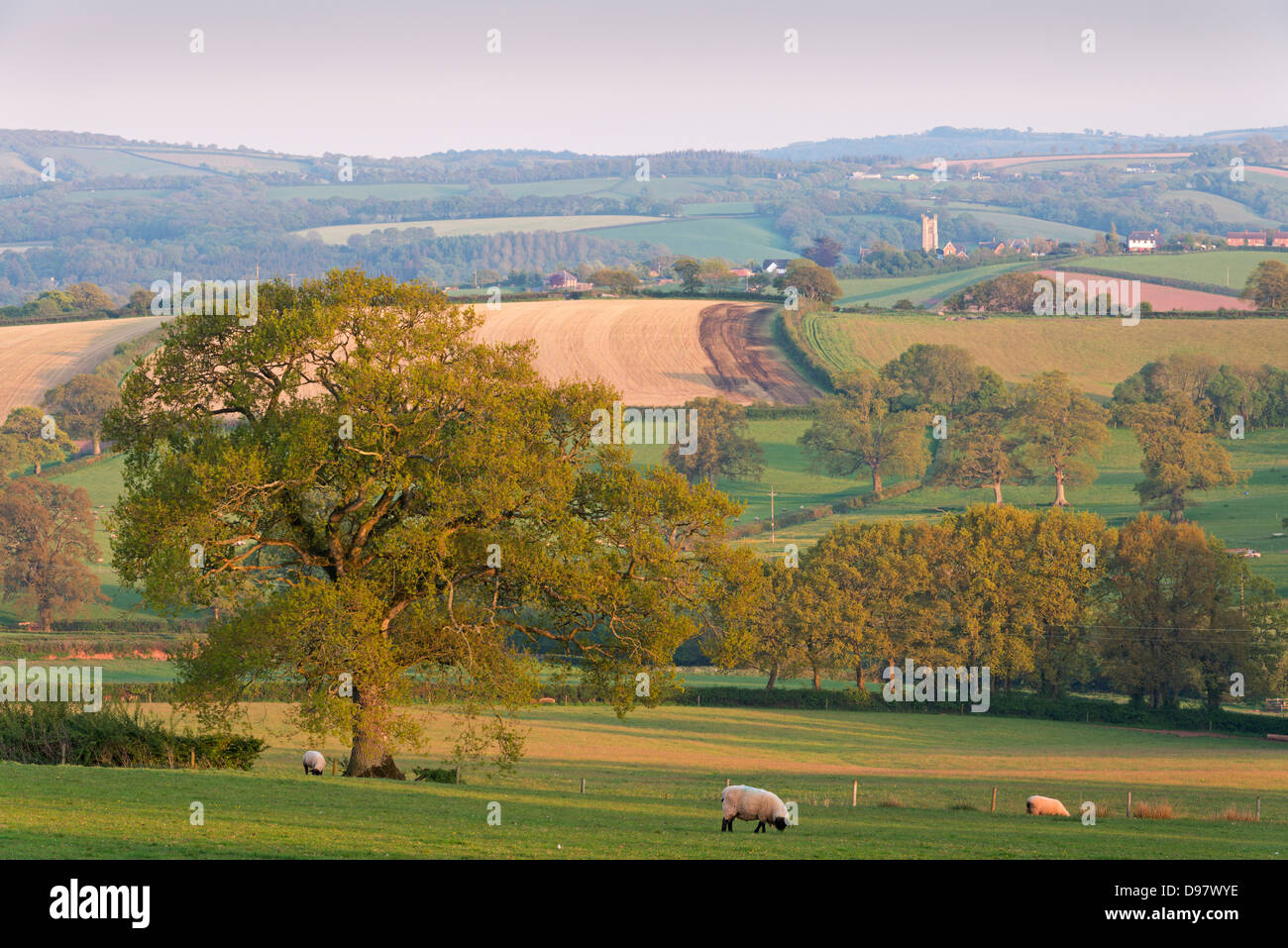 Picturesque rolling farmland, Copplestone, Devon, England. Spring (May) 2013 - Stock Image