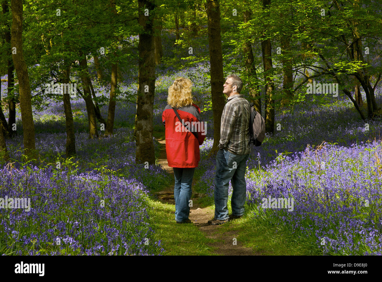 couple-enjoying-bluebells-in-fishgarths-wood-loughrigg-near-ambleside-D9E8J0.jpg