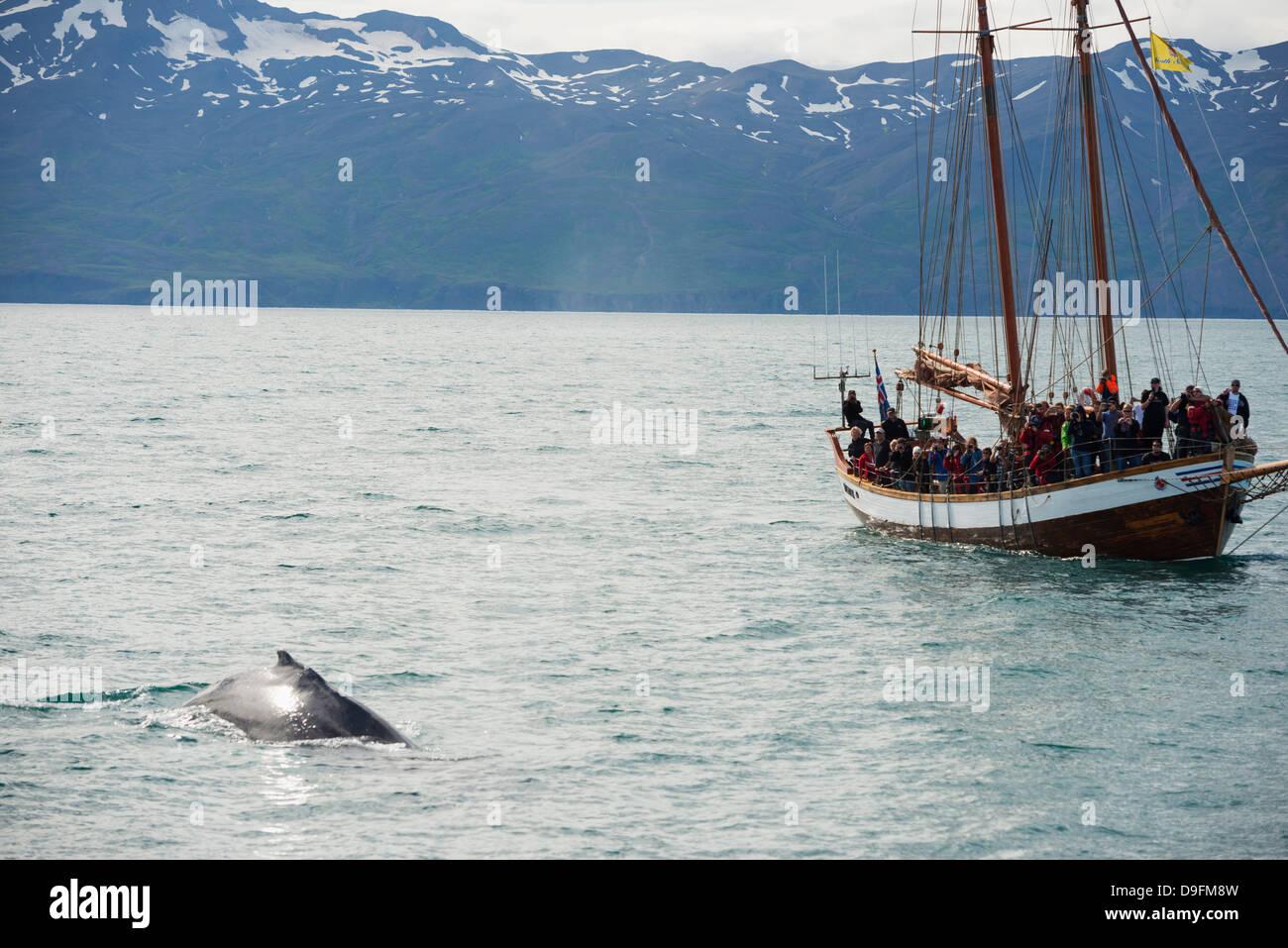 Whale watching tour, Husavik, Northern Region, Iceland, Polar Regions - Stock Image