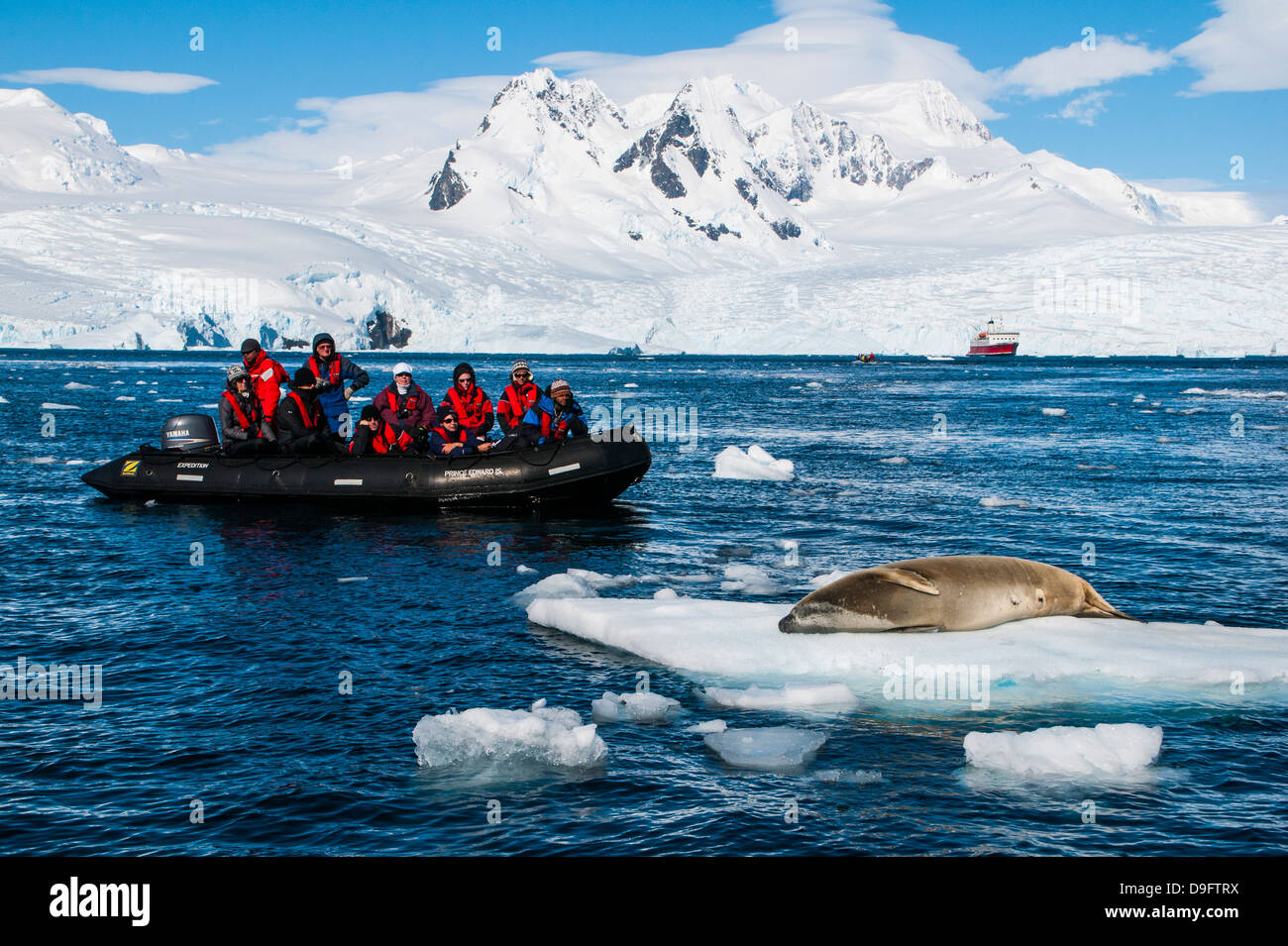 Tourists in a Zodiac in front of glaciers in Ciera Cove looking at a leopard seal, Antarctica, Polar Regions - Stock Image
