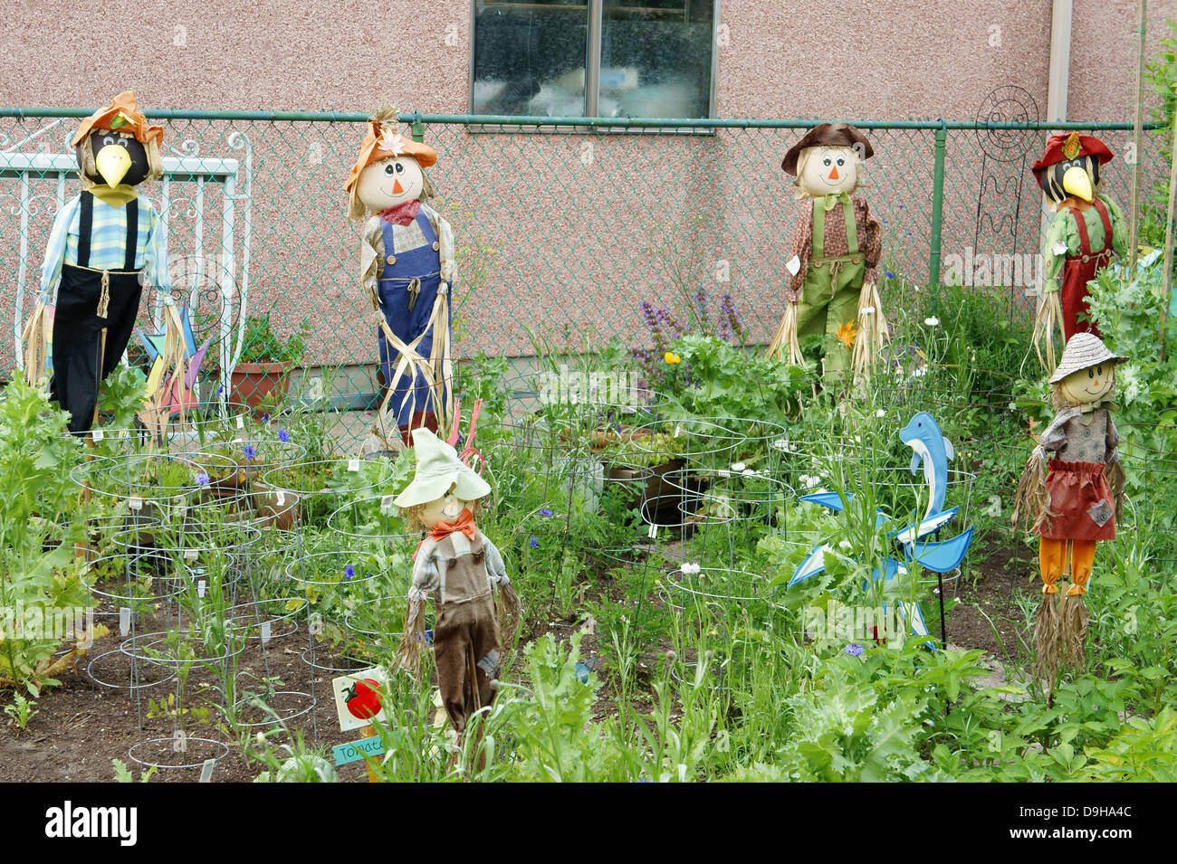scarecrows-in-a-backyard-vegetable-garden-vancouver-bc-canada-D9HA4C.jpg