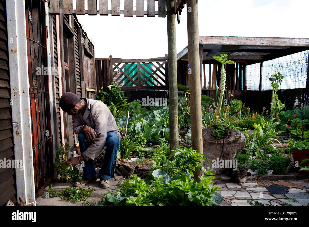 bfcaf0a18f Charles completed Soil Life training program 3 years ago He has created  thriving vegetable garden home in Lavender Hill Cape