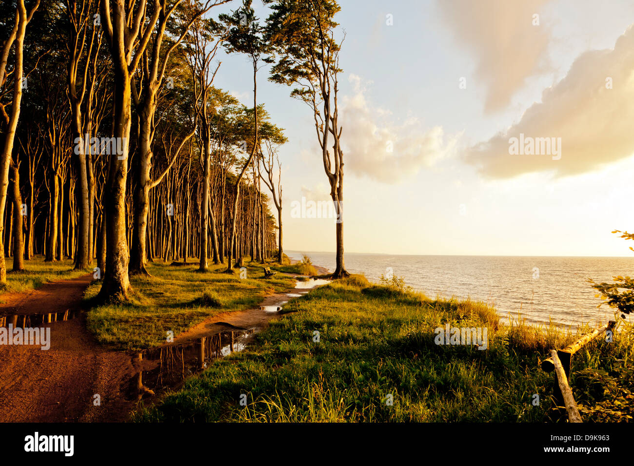 Baltic sea coast at Ostseebad Nienhagen with Haunted Woods at sunset - Stock Image