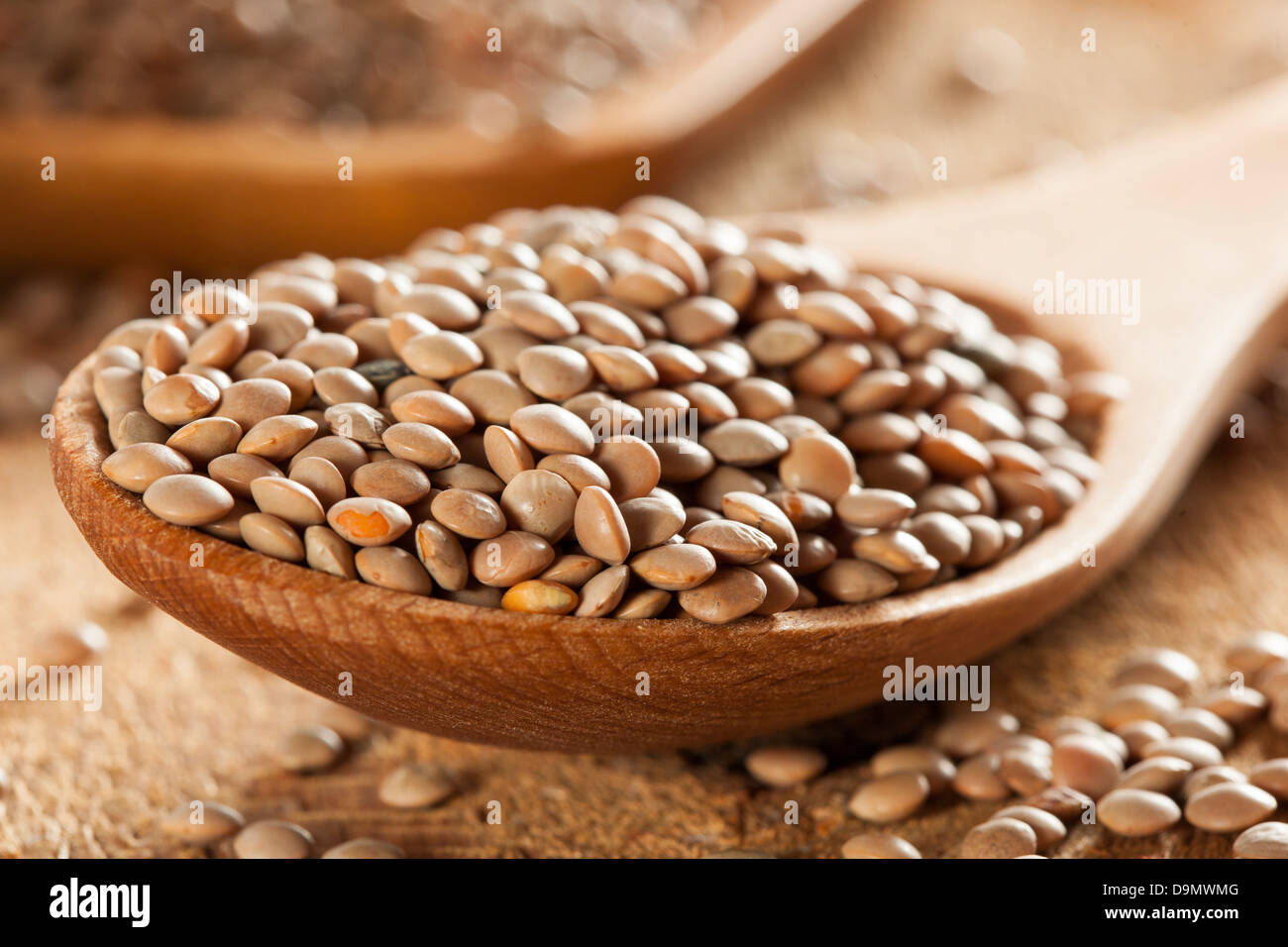 Dry Organic Brown Lentils against a background - Stock Image