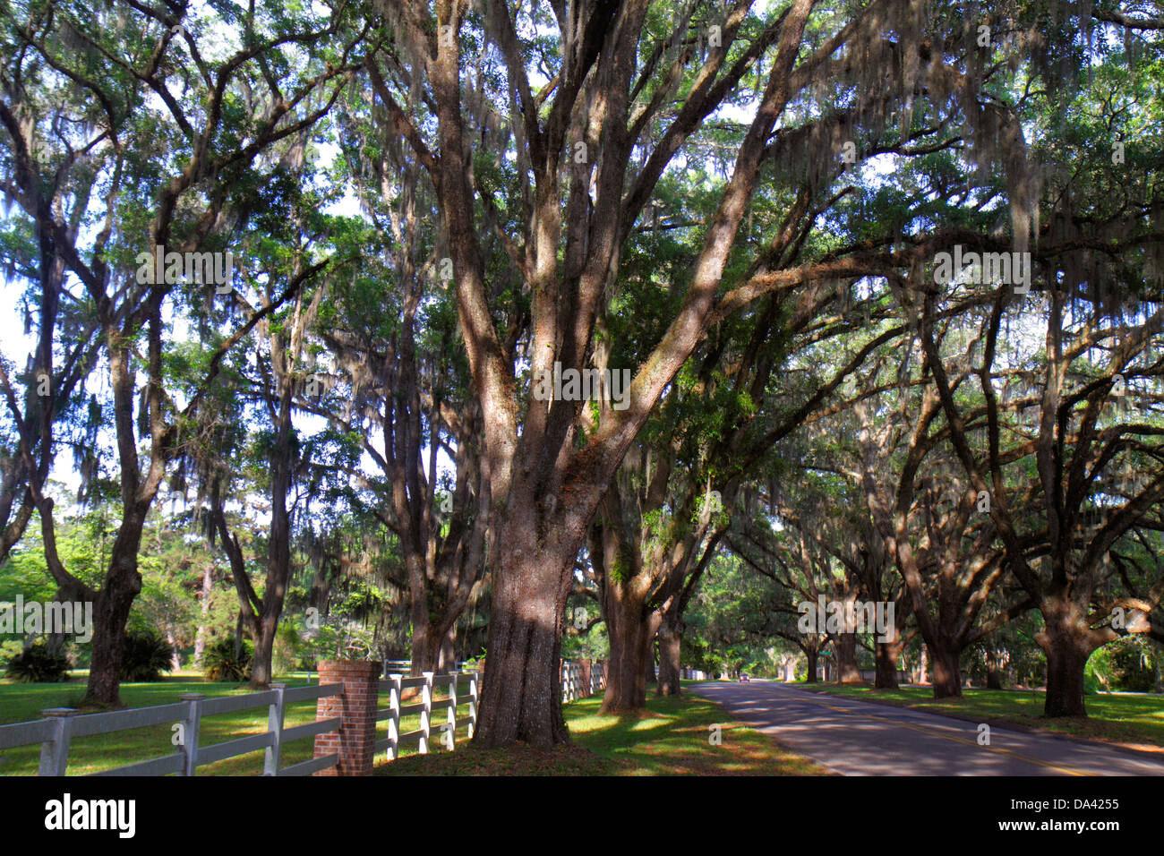 Florida, FL, South, Tallahassee, Canopy Road, live oak trees, Spanish moss, sightseeing visitors travel traveling Stock Photo