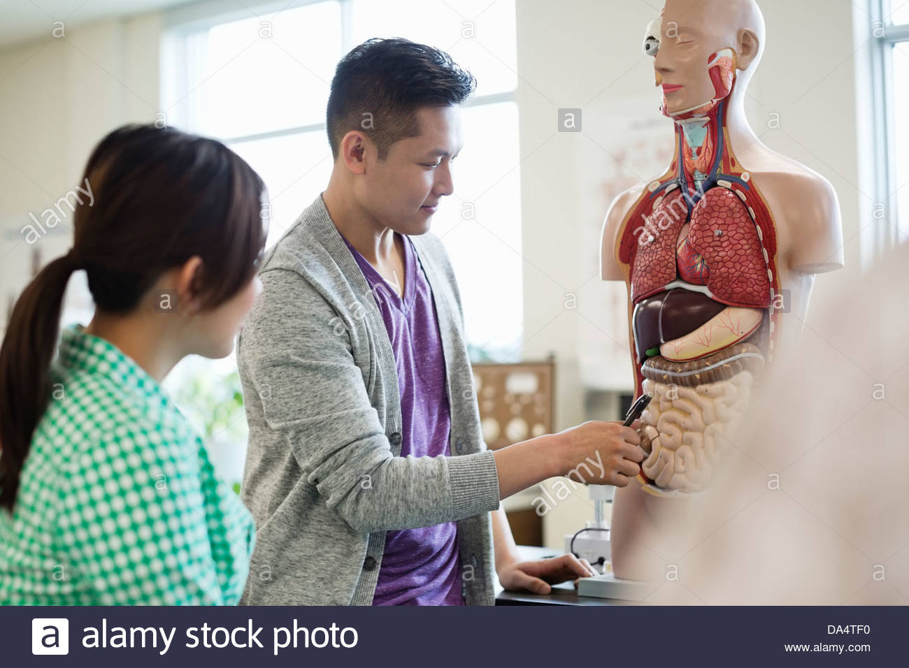 Students Learning Anatomy In College Science Lab Stock Photo