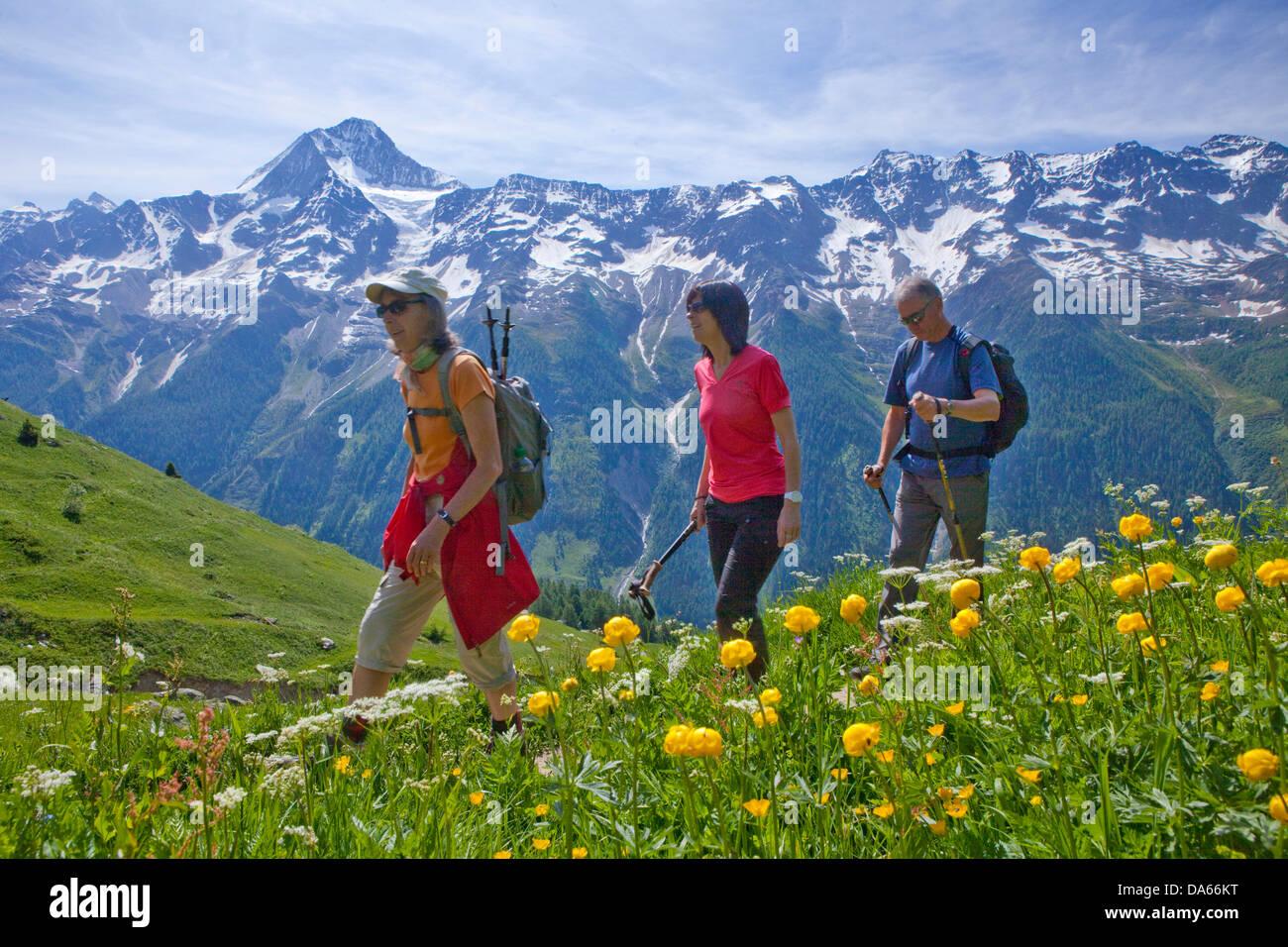 Walking, Hiking, Lötschentaler height way, height way, view, Bietschhorn, canton, Valais, mountain, mountains, - Stock Image