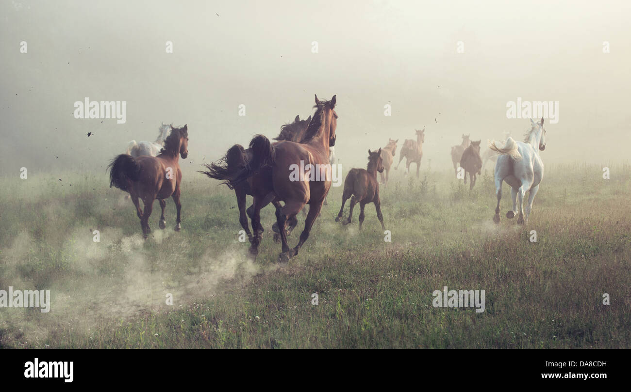 Group of horses on the meadow at the morning - Stock Image