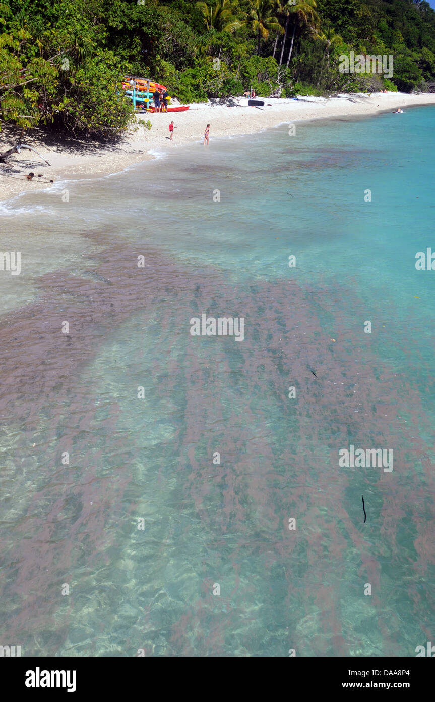 Algal bloom (Trichodesmium sp.) washing up on the shores of Fitzroy Island, Great Barrier Reef Marine Park, Queensland Stock Photo