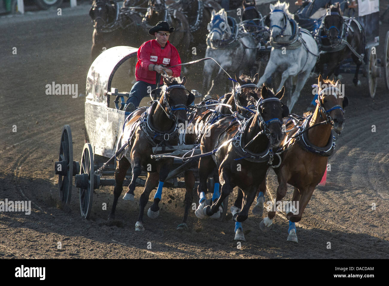 chuckwagon-race-at-the-calgary-stampede-DACDAM.jpg