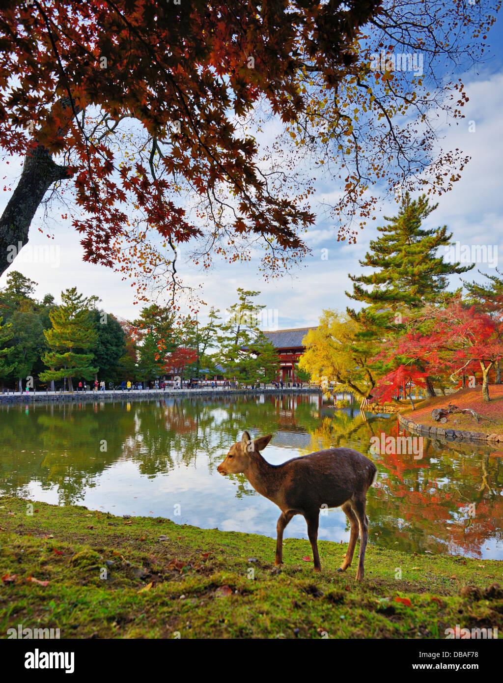 Deer at Todai-ji Temple grounds in Nara, Japan. - Stock Image
