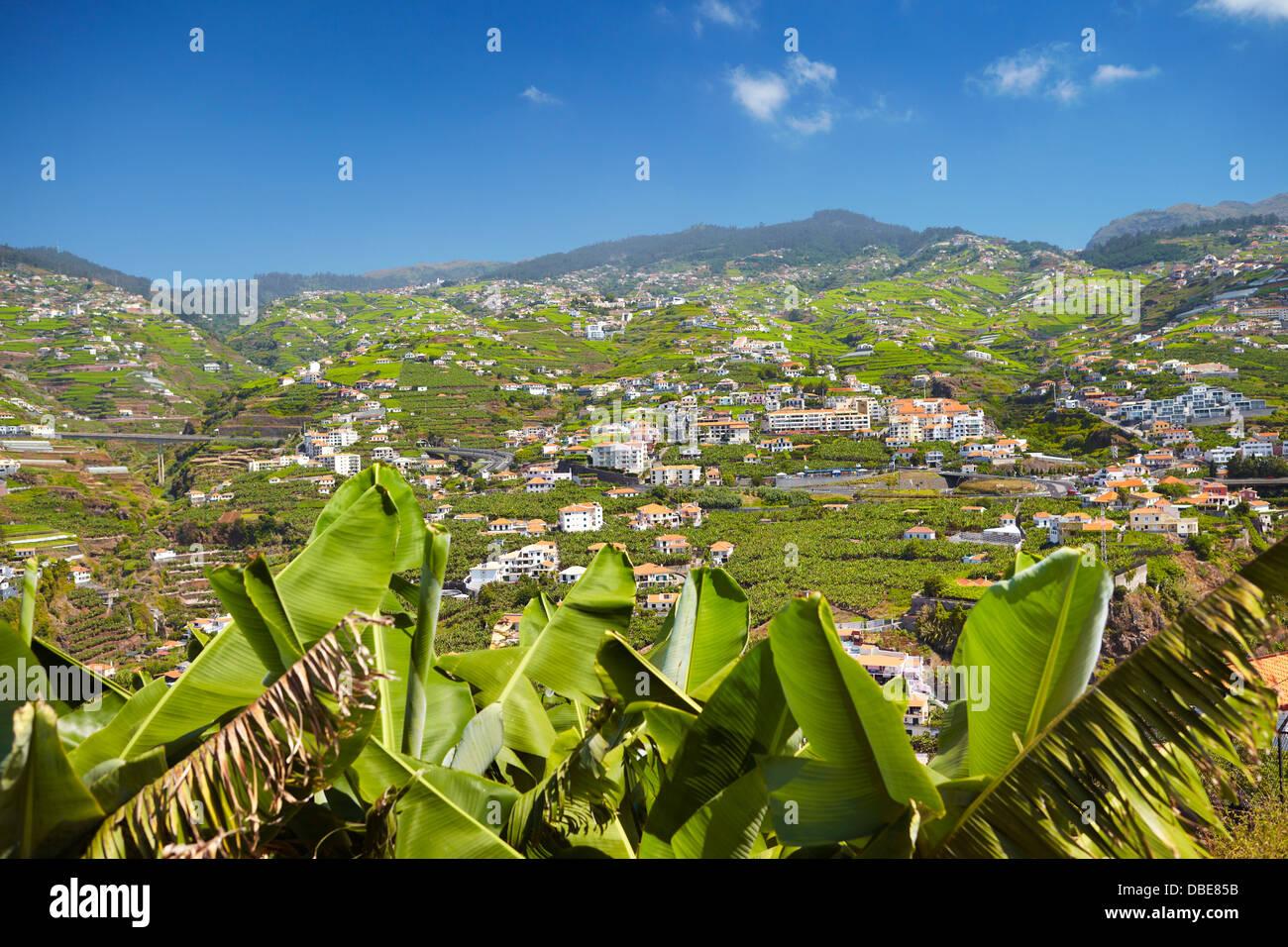 Banana plants cultivation - Camara de Lobos, Madeira Island, Portugal - Stock Image