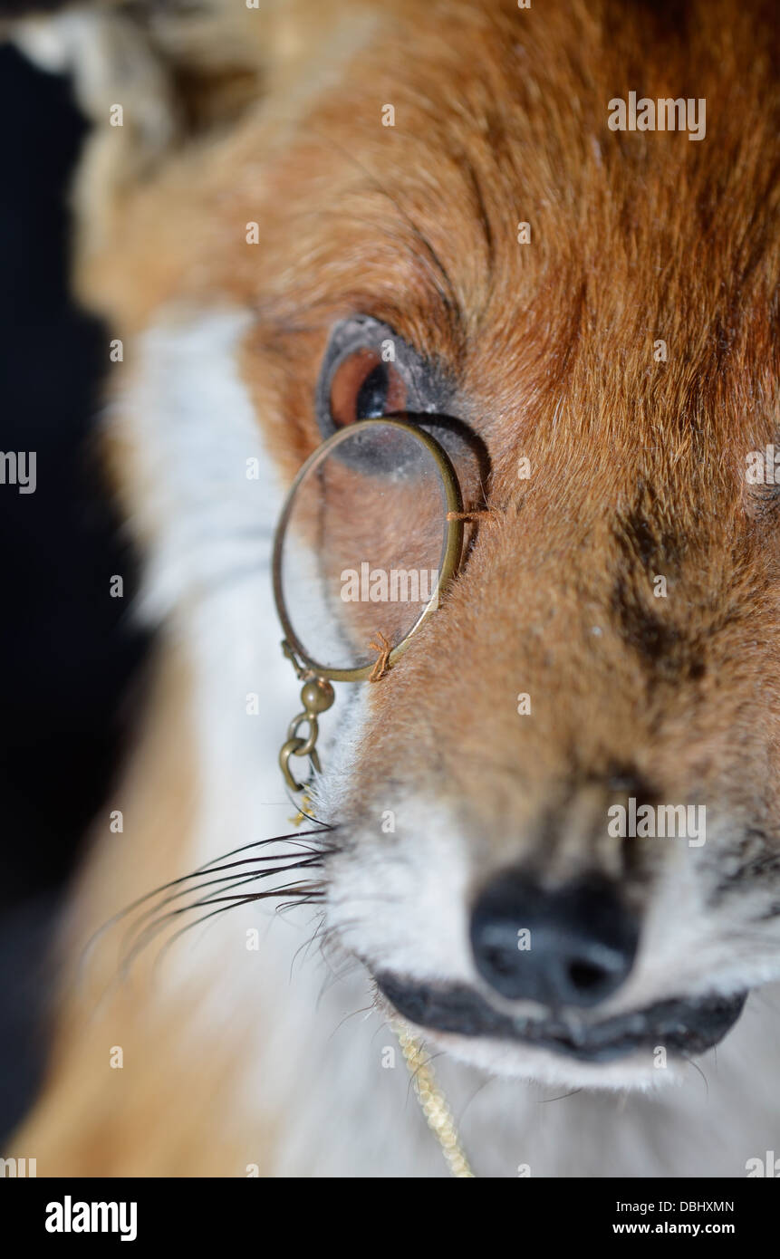 stuffed fox with monocle - Stock Image