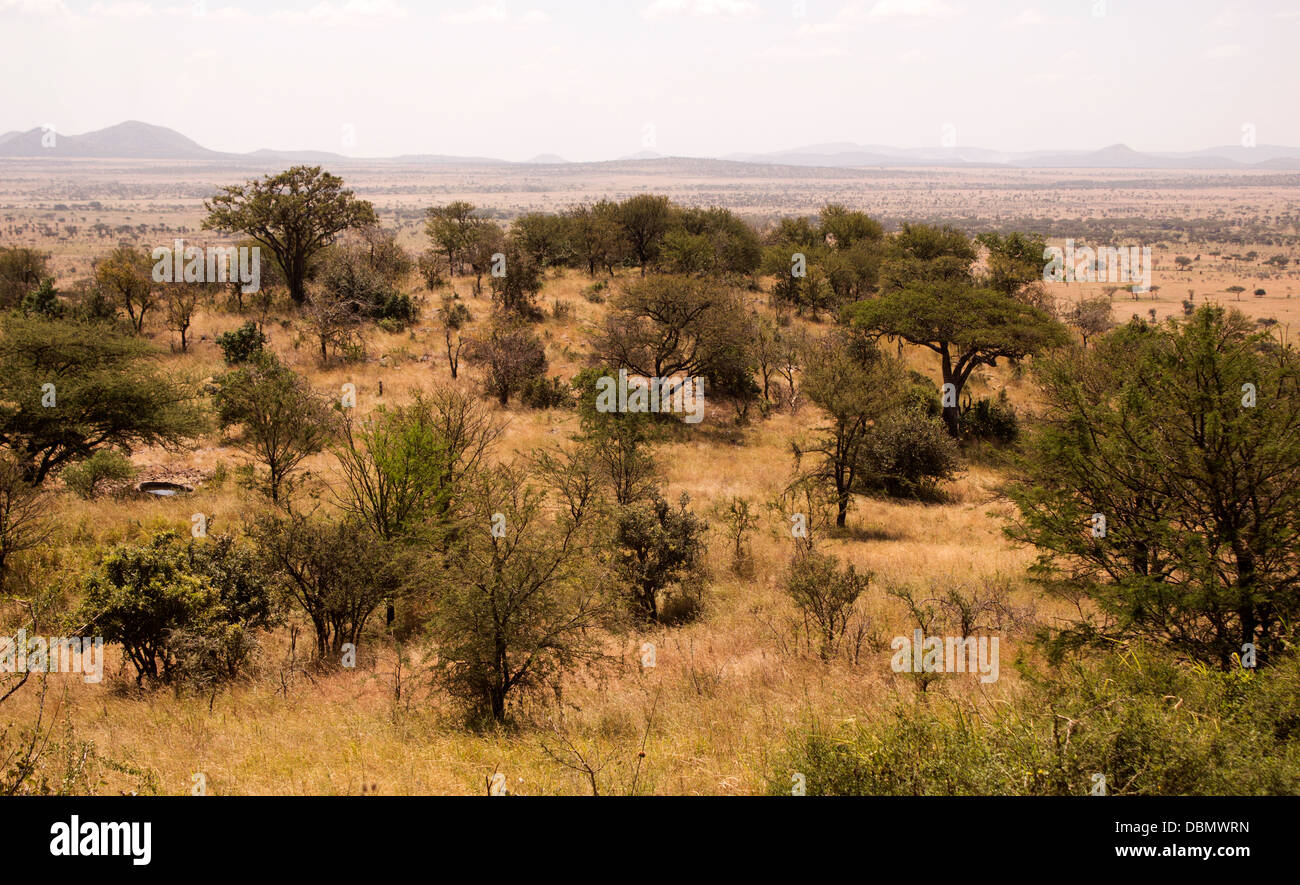view-from-the-balcony-of-the-serengeti-s