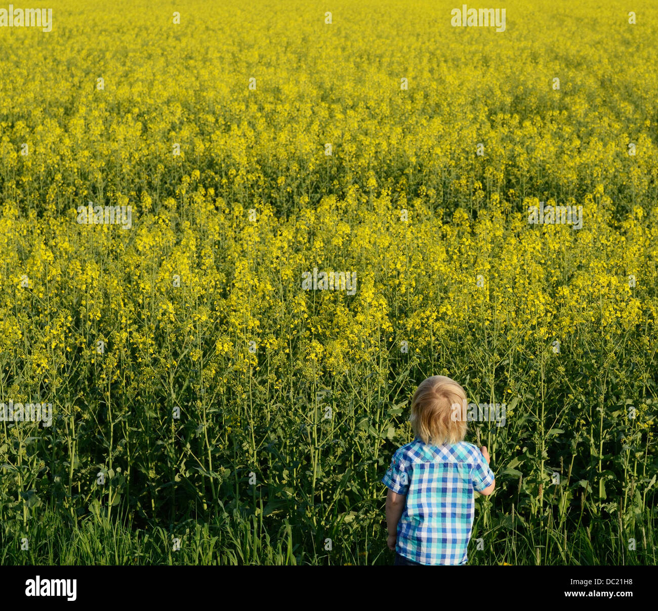 Boy looking at field, high angle view - Stock Image