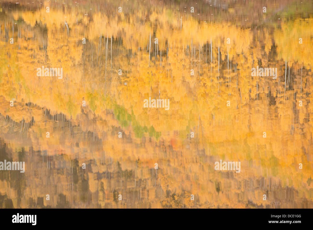 USA, Colorado, Aspen. Aspen trees reflected in Maroon Lake. - Stock Image