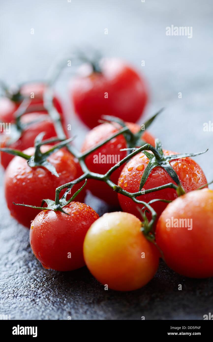 tomato vine - Stock Image