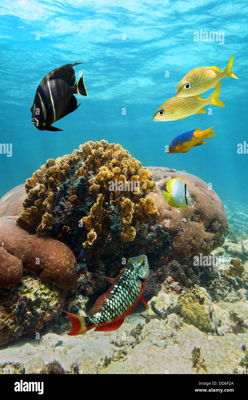 Beautiful coral and reef fish with water surface in background, Caribbean sea, Colombia - Stock Image