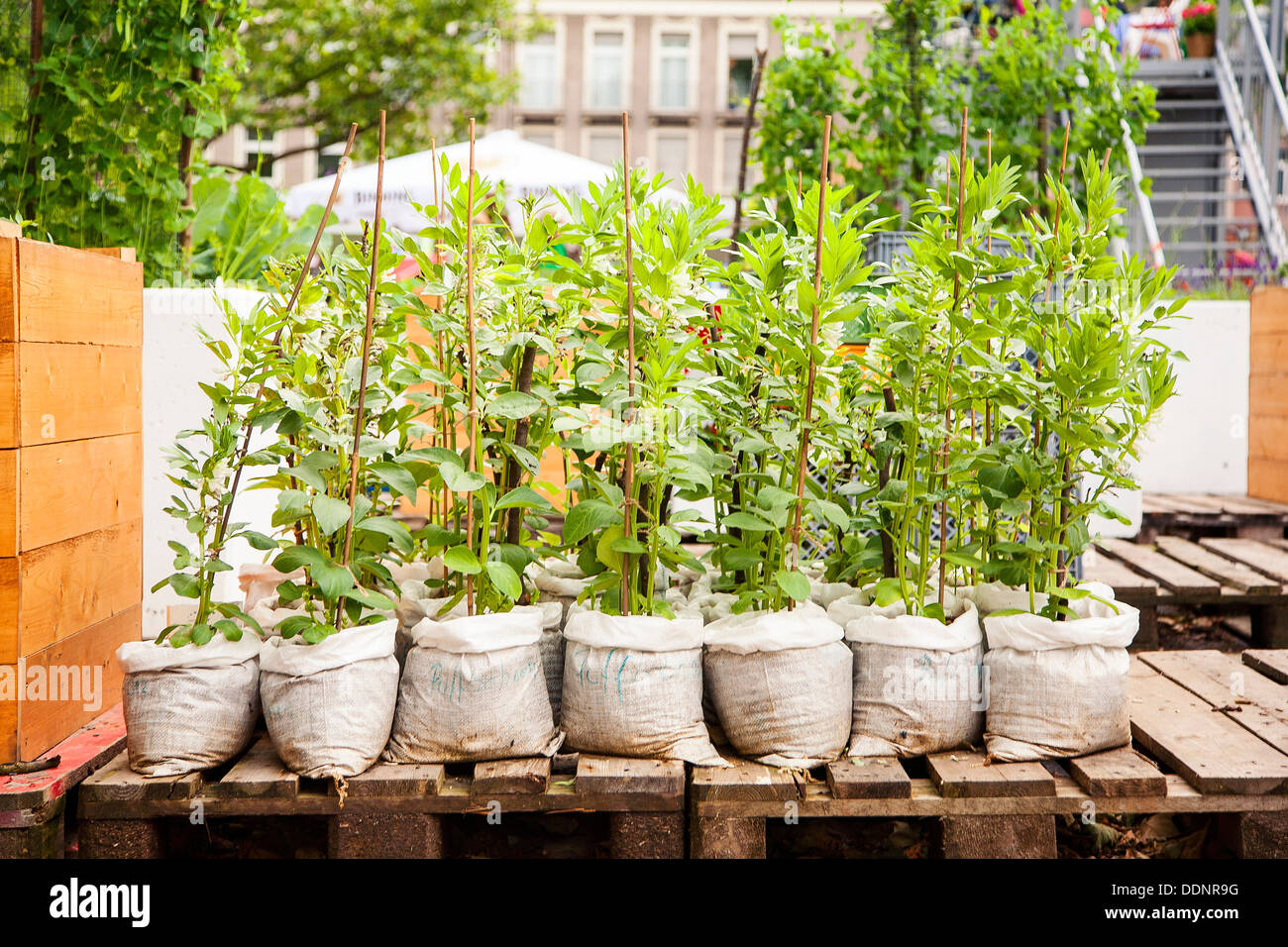 Urban Gardening, Frankfurt am Main, Hesse, Germany, Europe - Stock Image