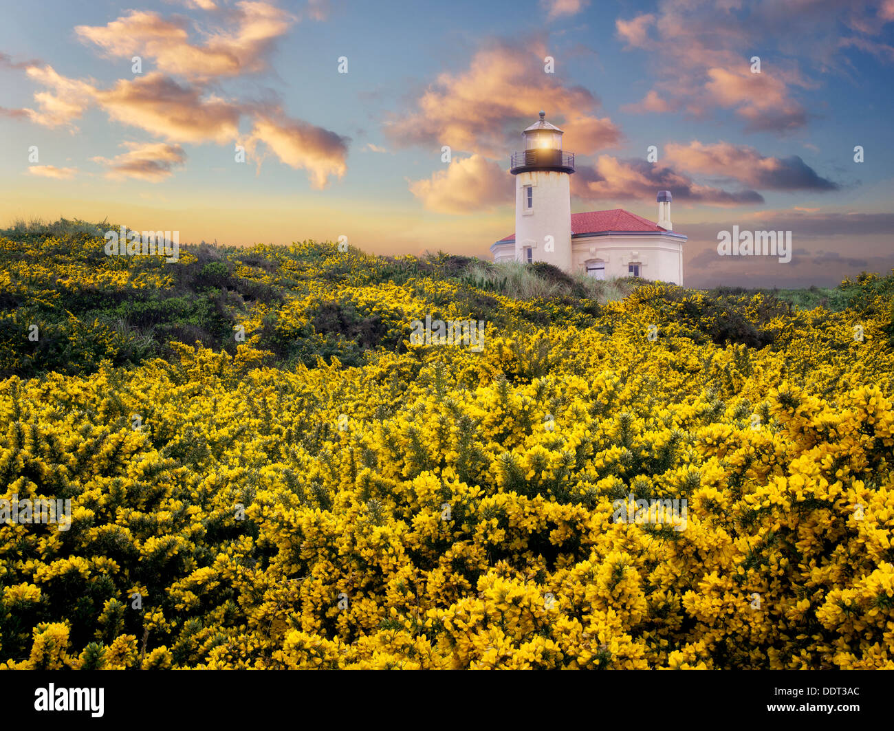 Coquile River Lighthouse with gorse. Bandon, Oregon C00454D-5 - Stock Image