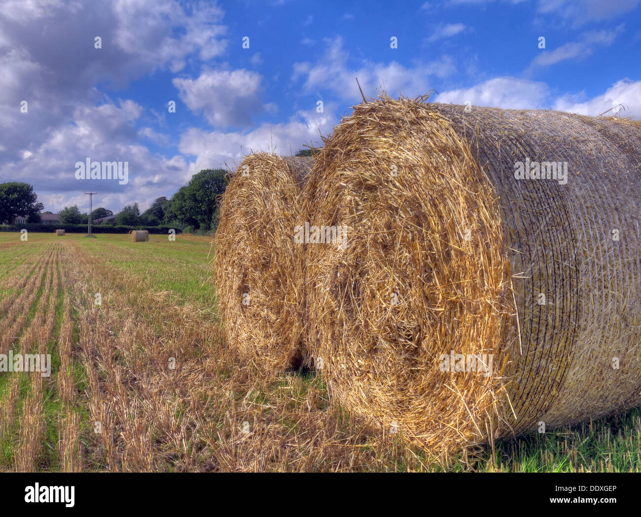 summer,sunshine,and,a,blue,sky,compact,bale,grass,grasses,animal,fodder,feed,pasture,or,rangeland,on,which,to,graze,an,animal,fresh,grass/alfalfa,hay,newly,baled,production,and,harvest,haymaking,doing,Hayfield,Hayfields,spring,fodder,gotonysmith fields,Buy Pictures of,Buy Images Of