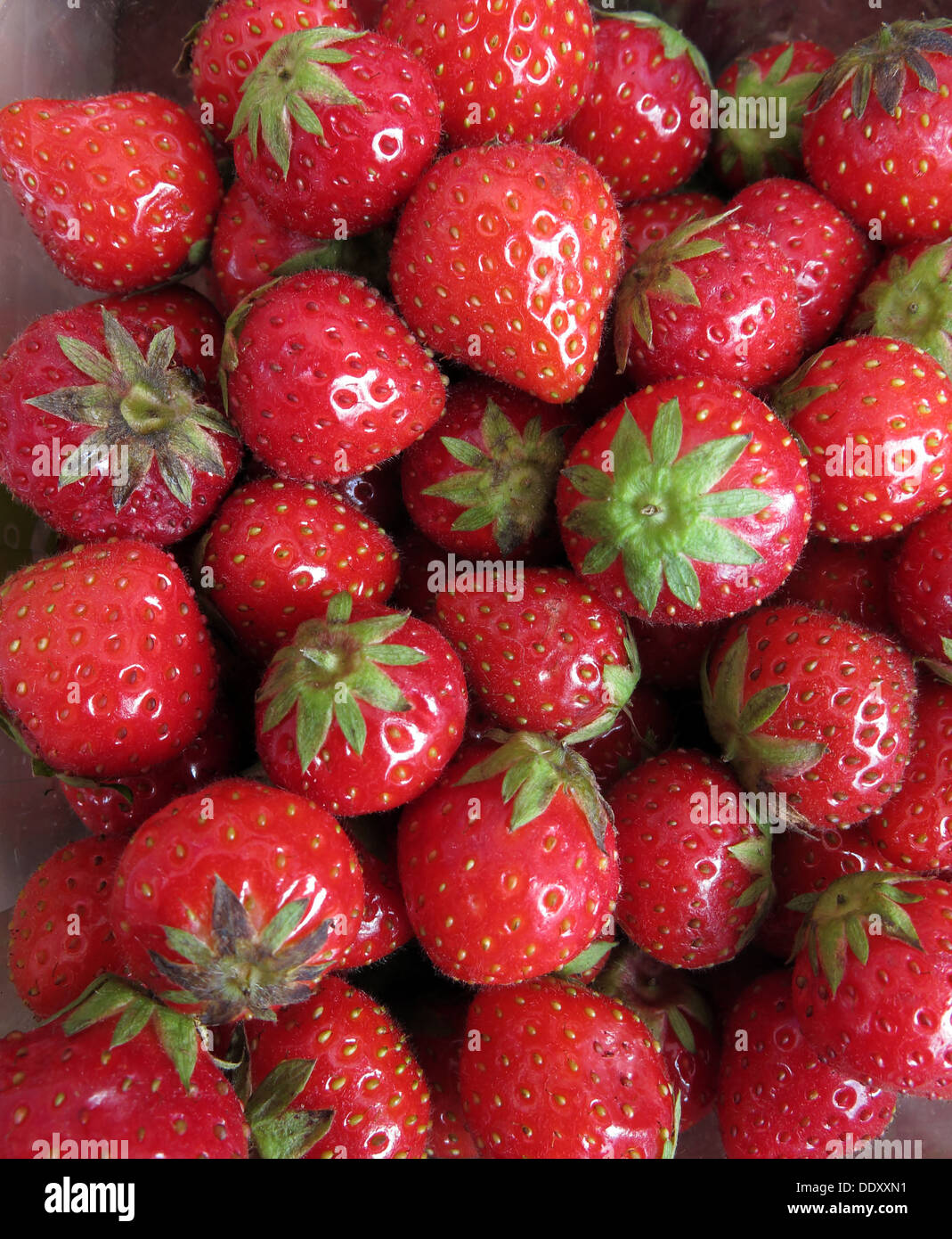 fruit,fruits with stalks,one,of,five a day,healthy,organic,garden,Fragaria × ananassa,hybrid,bright,fruity,juicy texture and,juicy,texture,sweetness,sweet,tasty,dozens,hundreds,5aDay,five,a,day,British,Jam,Five a day,5 a day,Five a day,British Strawberries,British Strawberry,gotonysmith,Jello,preserve,preserves,strawberry,@hotpixuk,hotpixuk,five,a,day,5,5aday,fruit,Strawberry Jam,Buy Pictures of,Buy Images Of,Low Fat Diet,Five A Day
