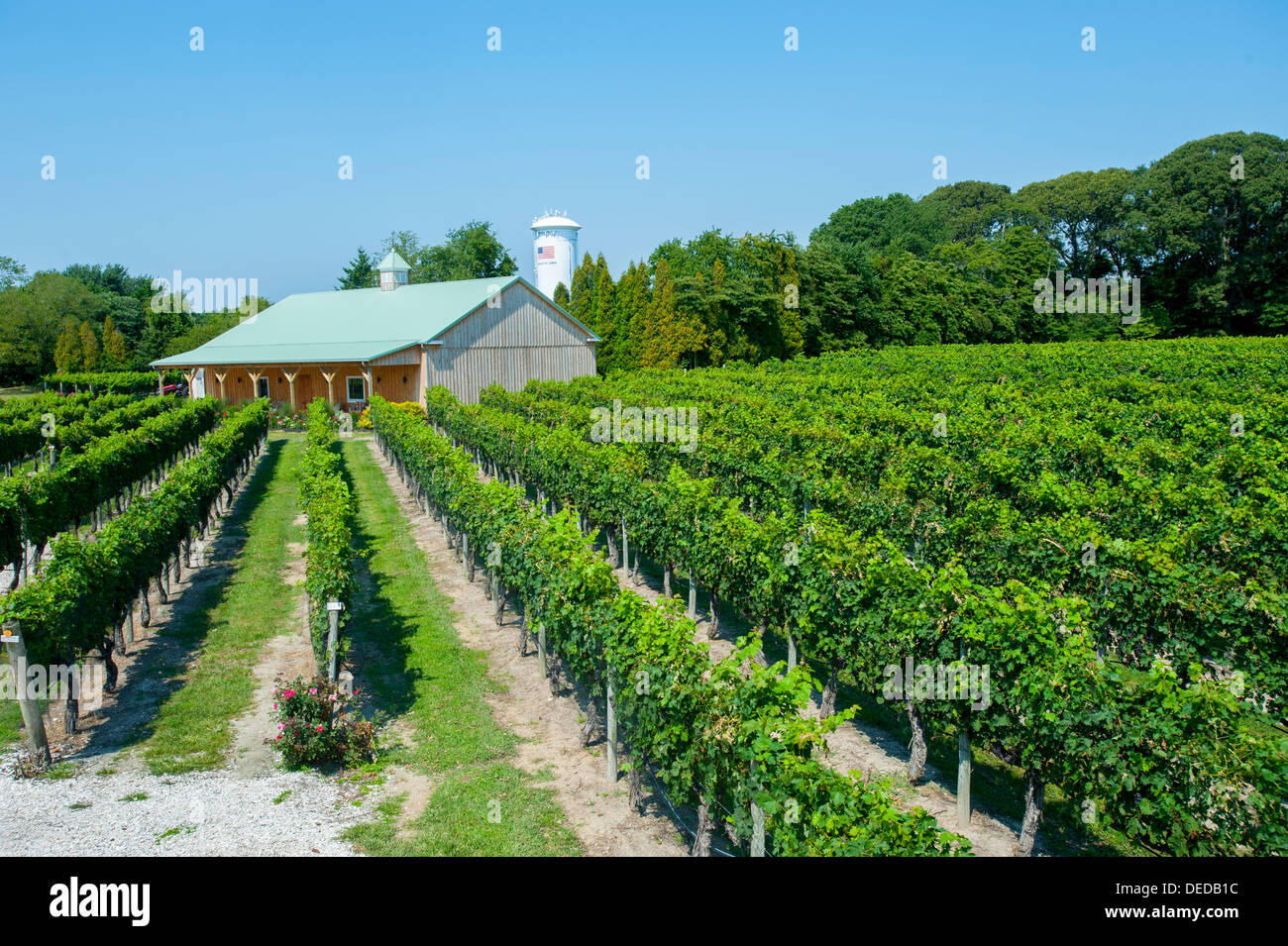 usa-new-jersey-nj-cape-may-winery-and-vineyards-on-the-southern-jersey-DEDB1C.jpg
