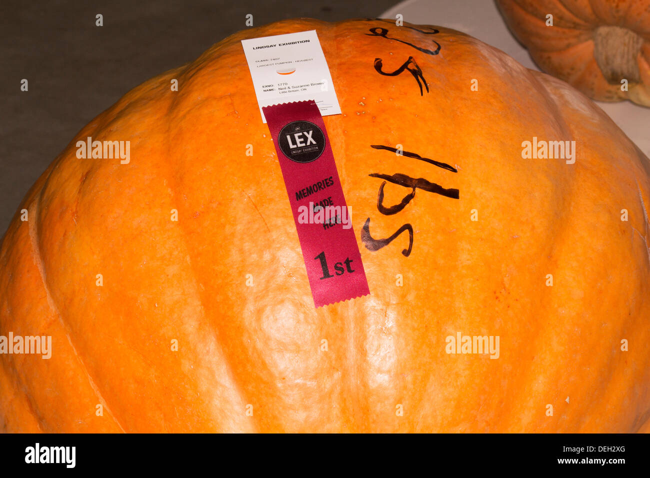 largest-heaviest-pumpkin-first-prize-at-lindsay-fair-and-exhibition-DEH2XG.jpg