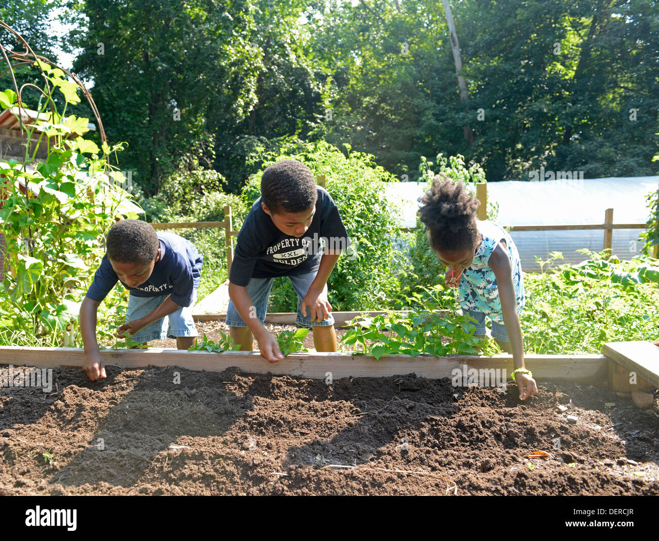 Black children from New Haven practice planting lettuce at Common Ground High school, an environmental charter school. - Stock Image