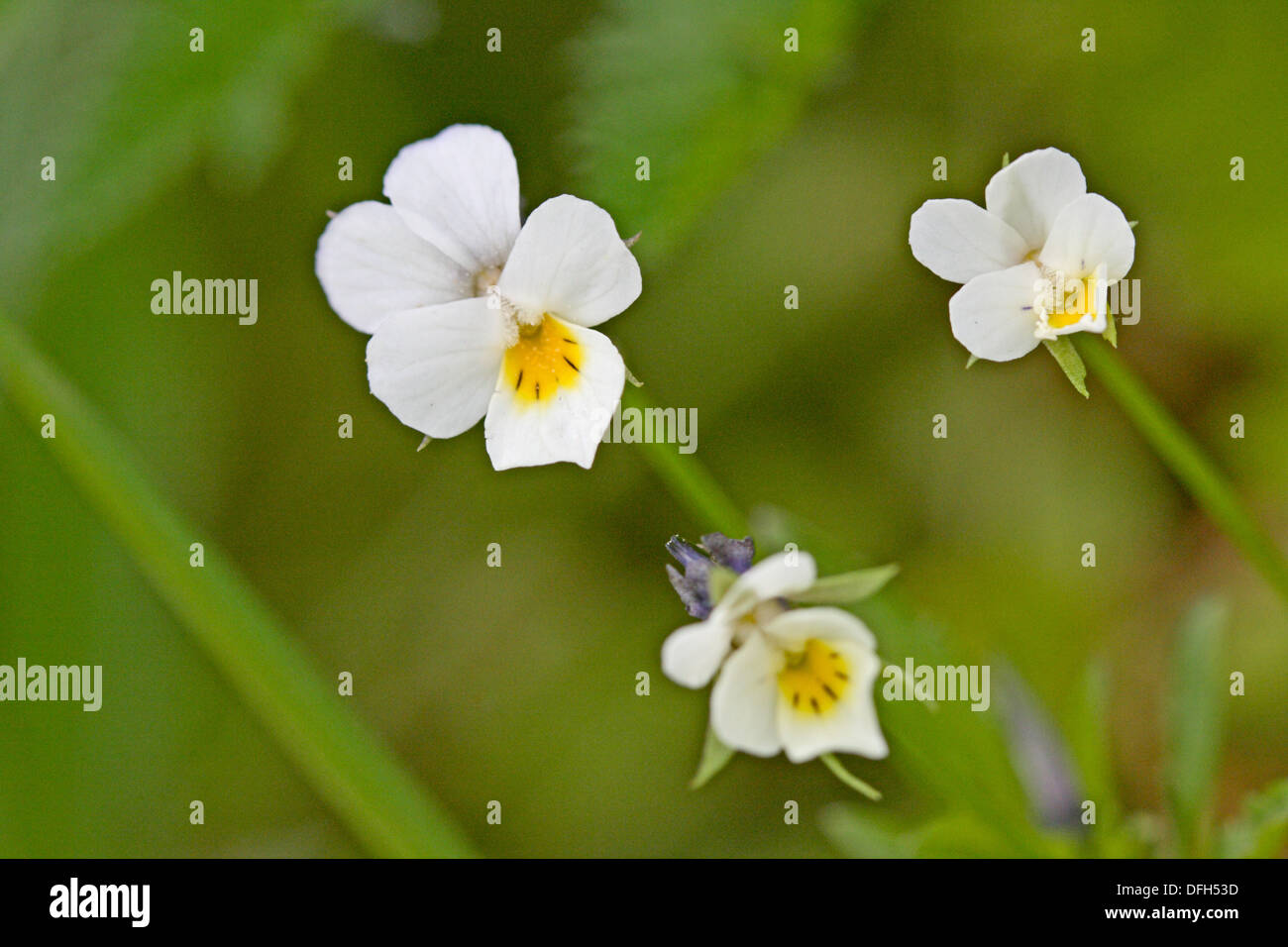 Attractive White Flower With A Yellow Center Image Best Evening