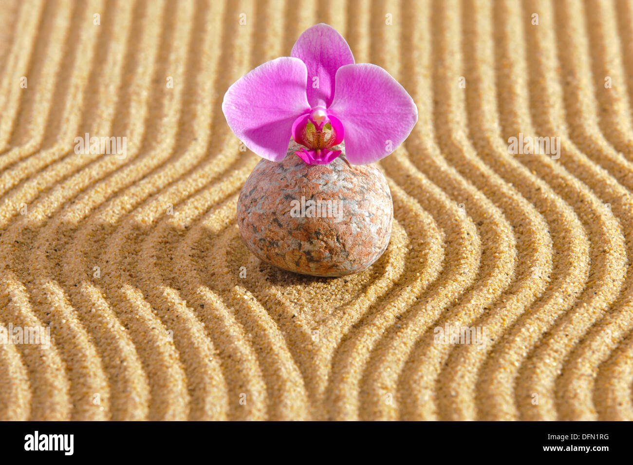 Japan ZEN garden in sand with stone Stock Photo: 61313380 - Alamy