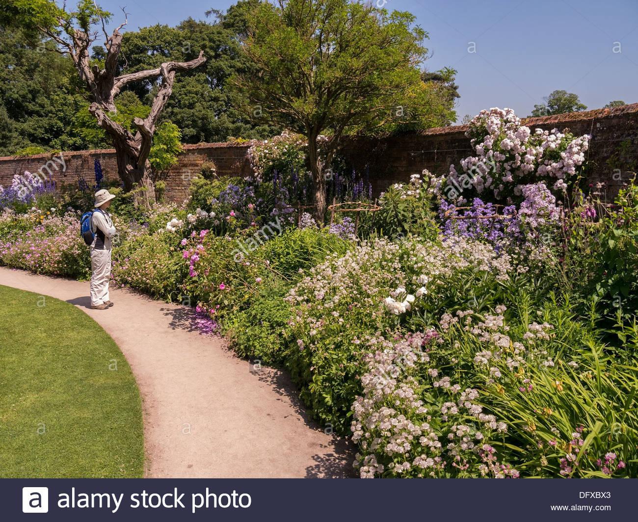 Woman Looking At Flowering Plants In Deep Flower Bed Border In Walled Garden  At Calke Abbey, Ticknall, Derbyshire. England, UK
