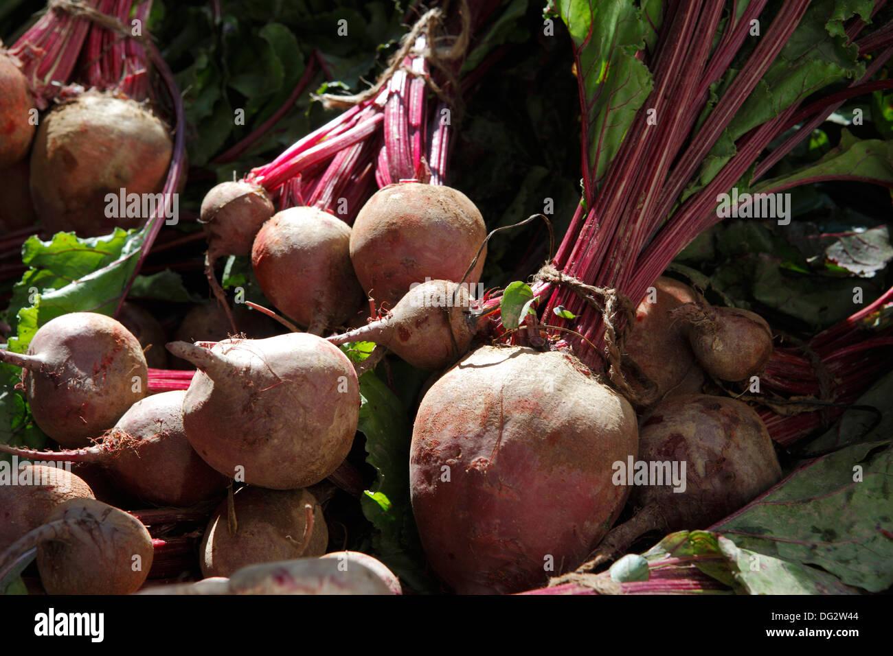red turnip - Stock Image