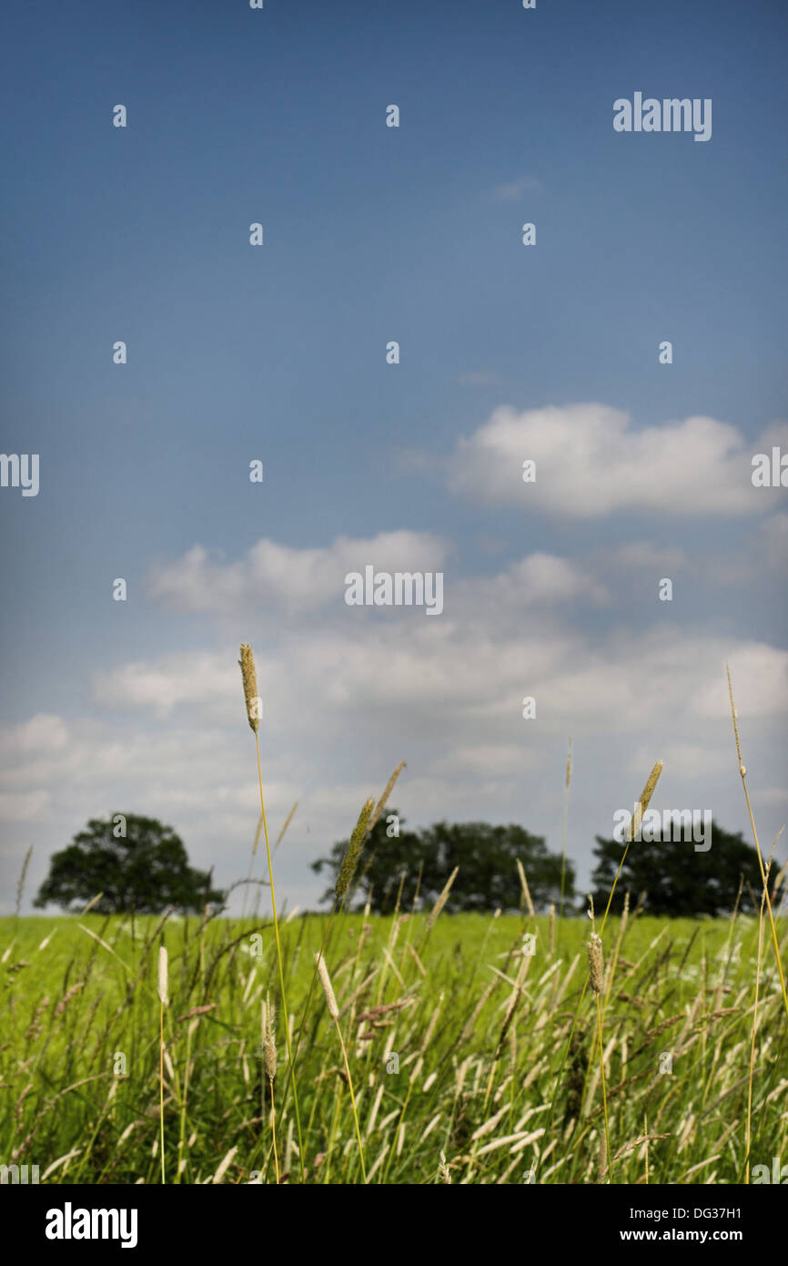 cropland with trees and blue sky - Stock Image