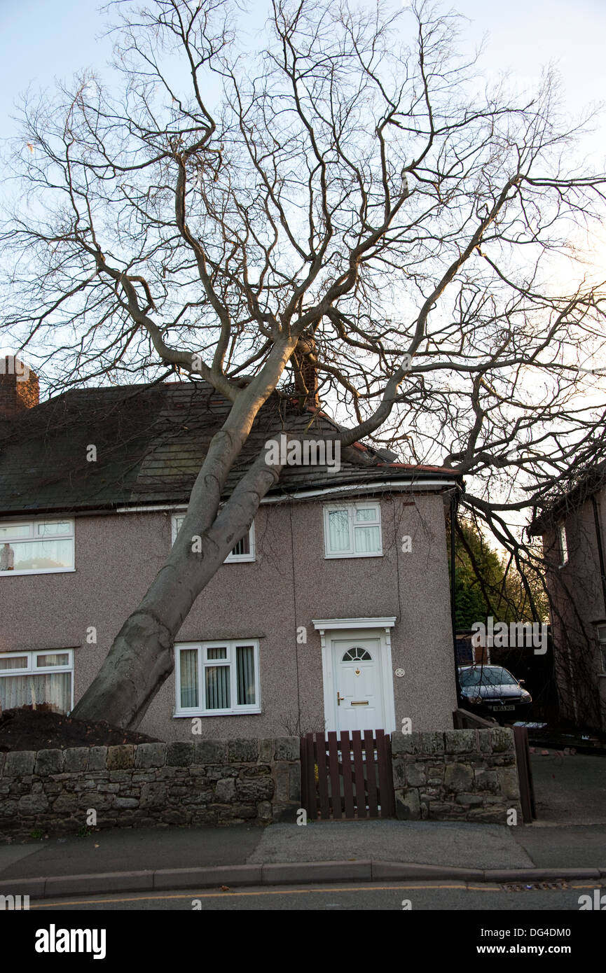 Huge Large Tree Fallen Crashed on to house in storm damaging roof severely - Stock Image