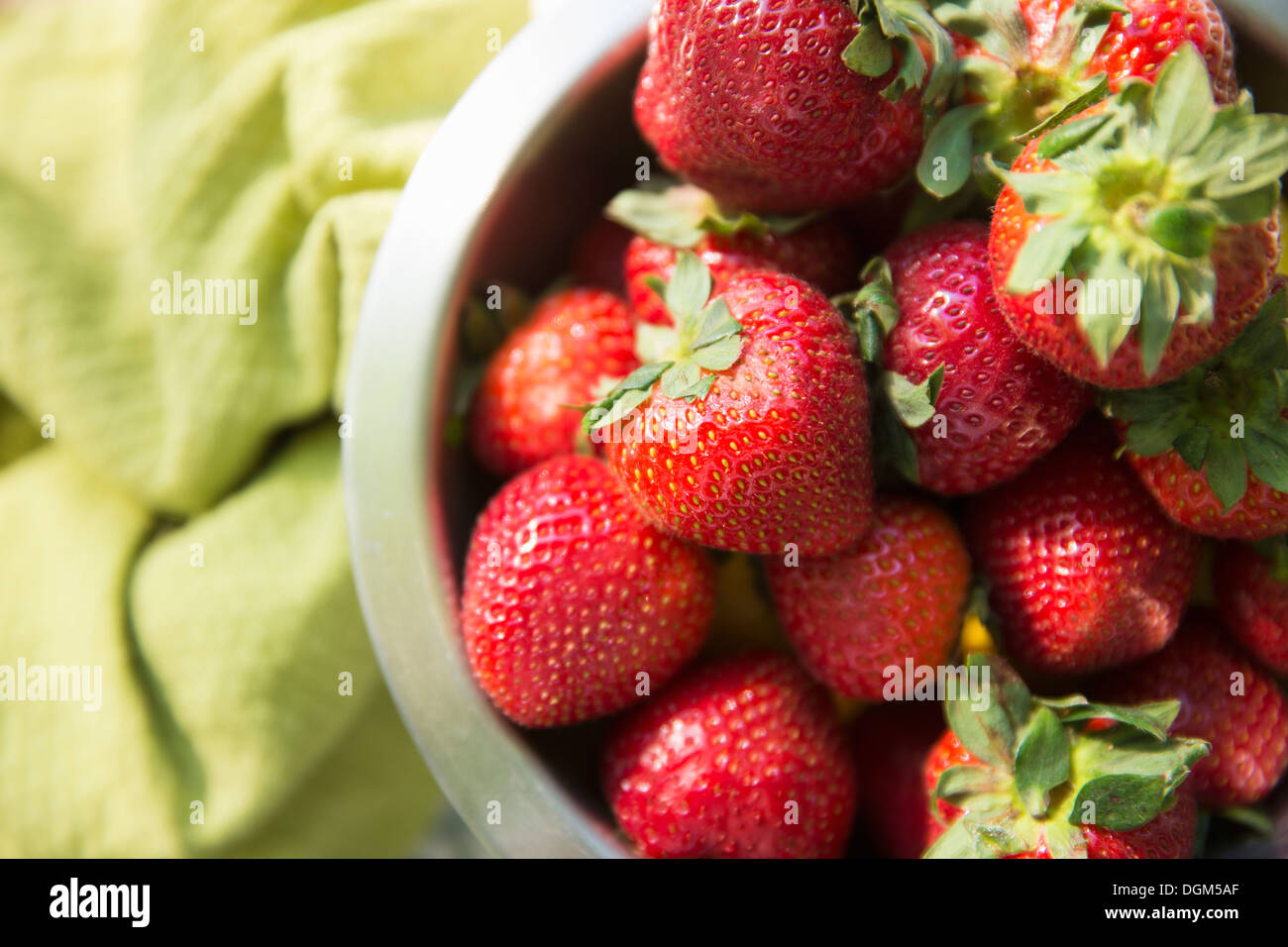 On the farm. A bowl of freshly picked organic fruits, strawberries. - Stock Image