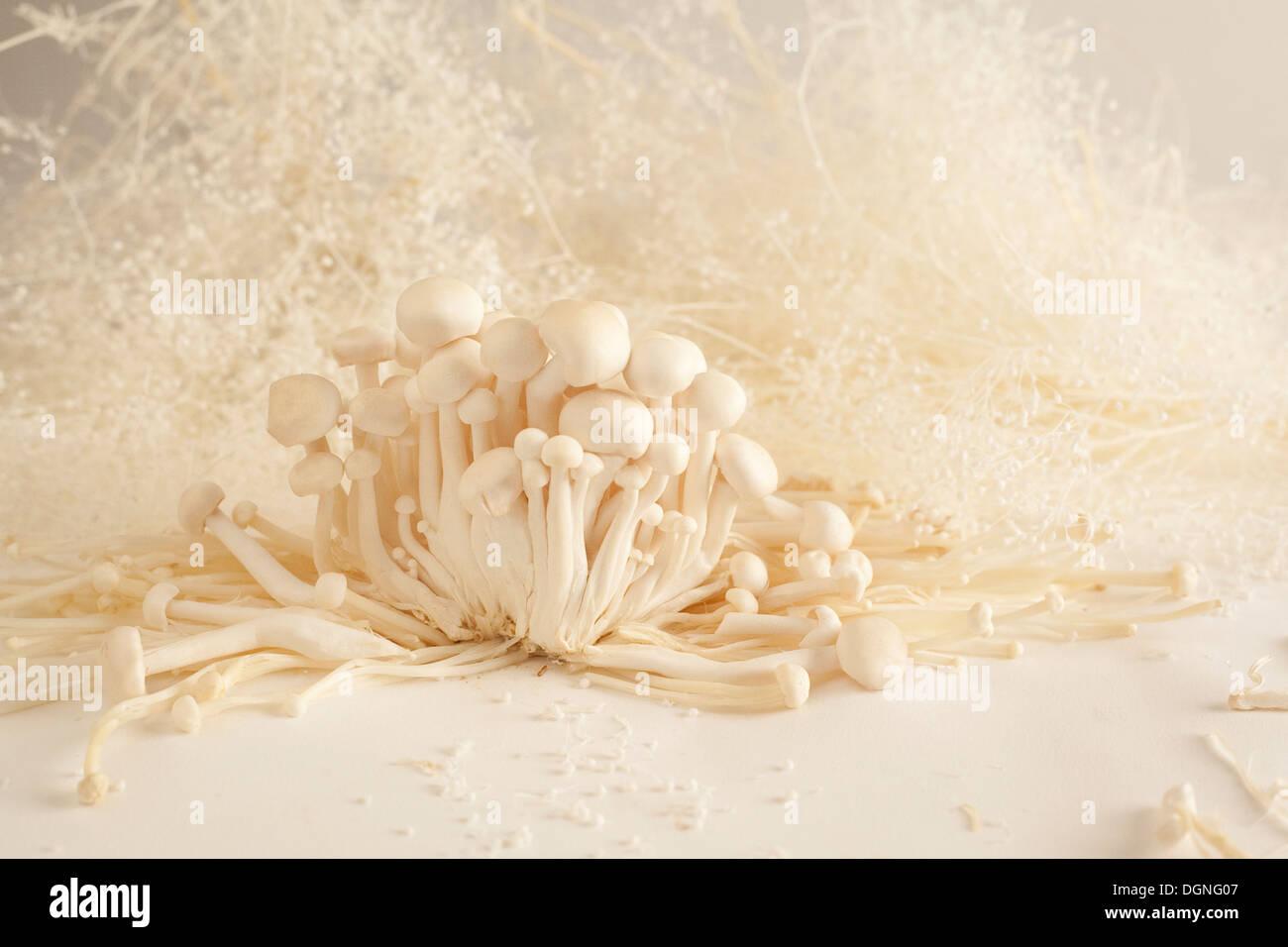 White beech mushrooms still life - Stock Image