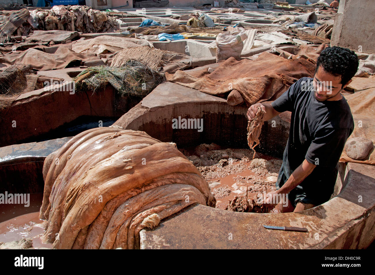Tanneries ( Tannery ) Leather and skin processing outdoor tanning vats  north of Medina district Marrakech Morocco North Africa 5f4171194e4c