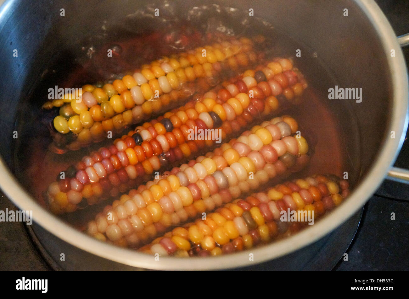 Boil Indian corn - Stock Image