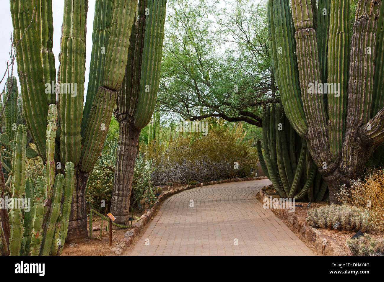 Desert Botanical Garden, Phoenix, Arizona Stock Photo: 62321072 - Alamy