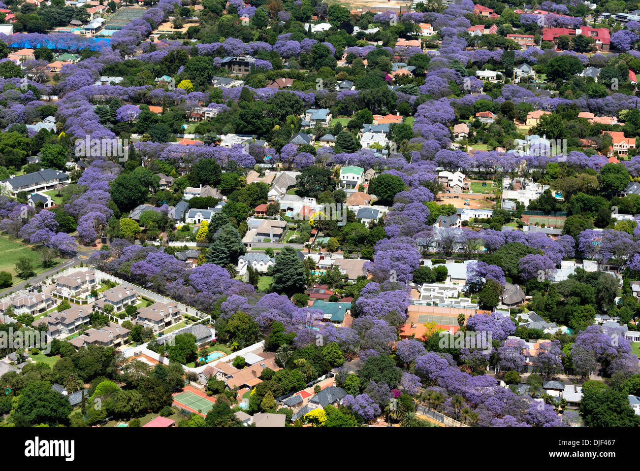 Aerial view of Jacaranda trees in blossom,Johannesburg suburbs, making it one of the greenest cities in the world.South - Stock Image